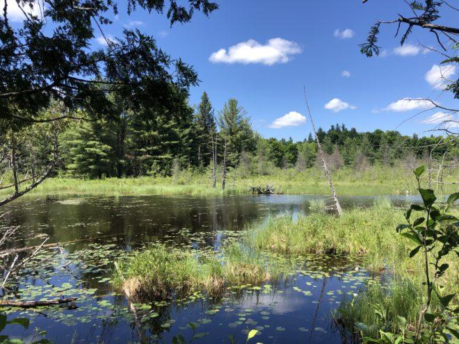 Purdon Conservation