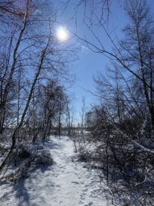 Read more about the article Alfred Bog Walk in Prescott-Russell: Hiking Guide