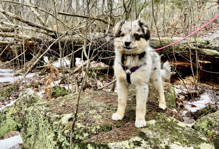 Read more about the article Ultimate Guide to Hiking with Dogs in Ottawa + Region