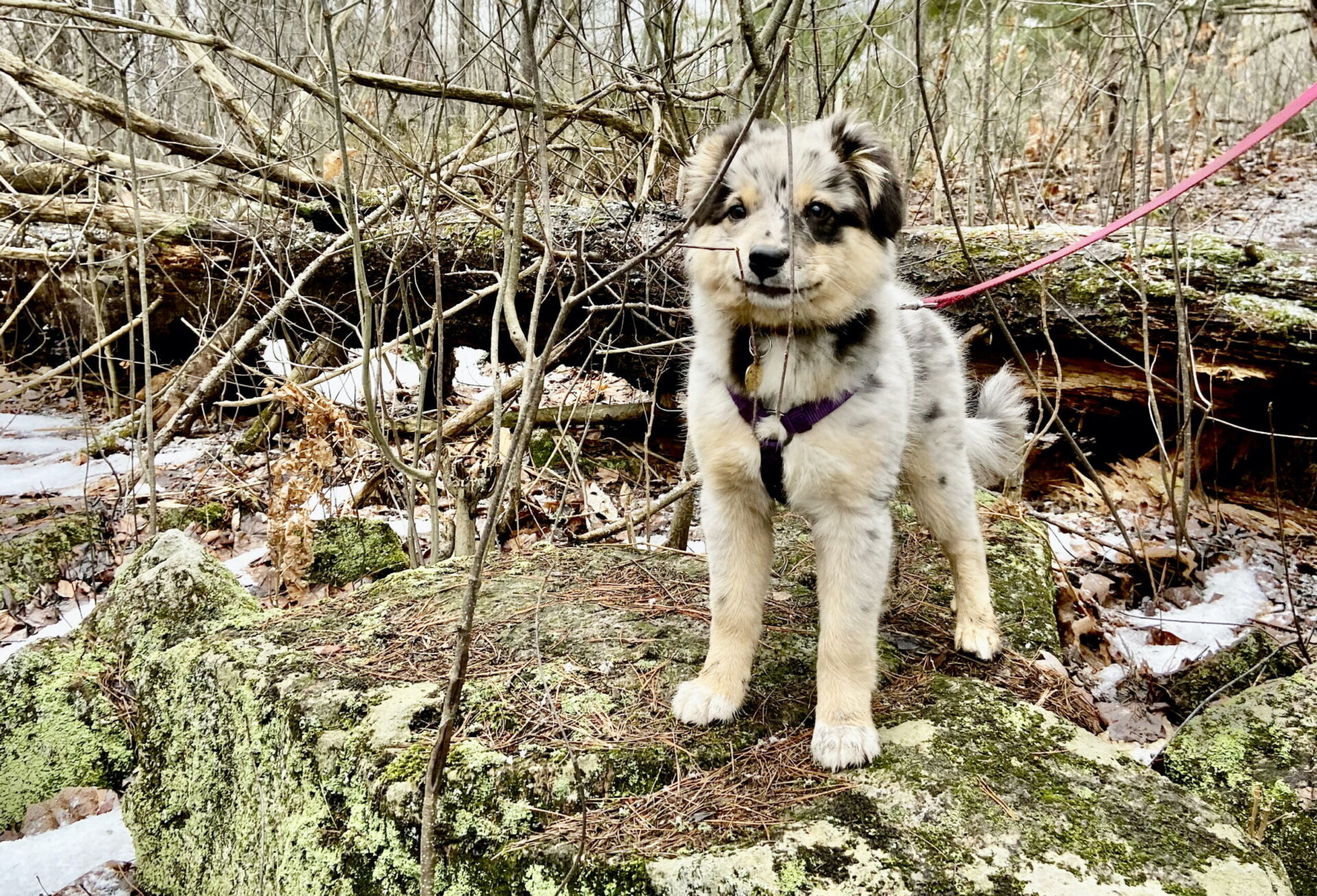 Ultimate Guide to Hiking with Dogs in Ottawa + Region