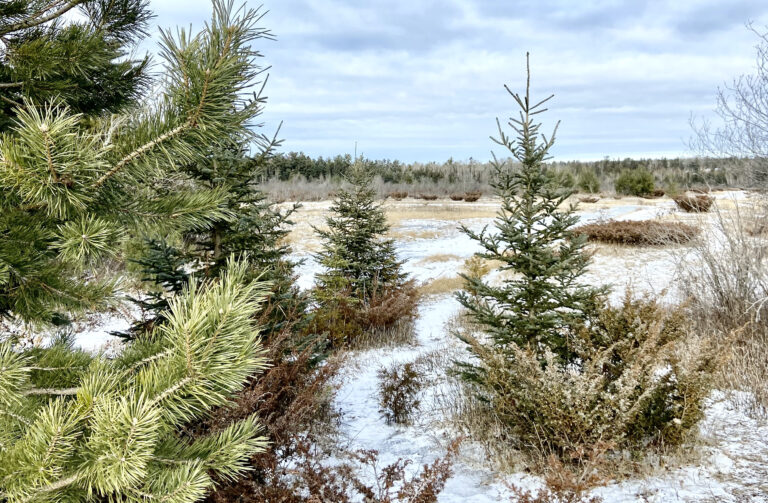Burnt Lands Provincial Park in Almonte: Trail Guide